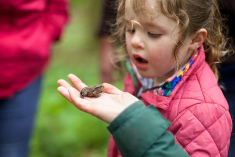 marvellous mini-beasts, exploring insects, looking at bugs