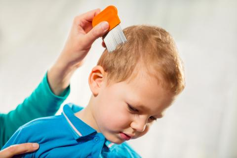 Parent treating son's head lice