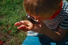 Boy looking at bug under magnifying glass in the garden
